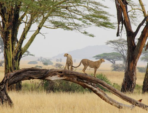 The Serengeti Rules – public lecture at the Royal Institution