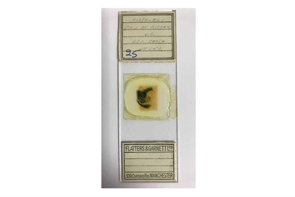 The original slide of the biological tissue specimen from which James produced his image of a hidden world.