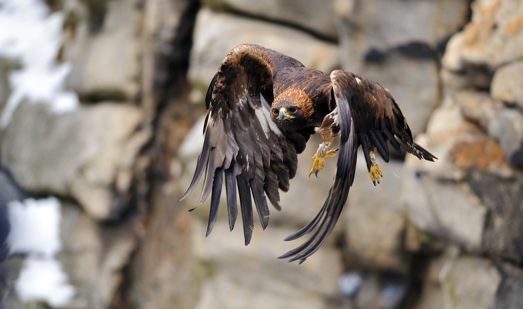 Raptors at risk – raising awareness about endangered birds of prey